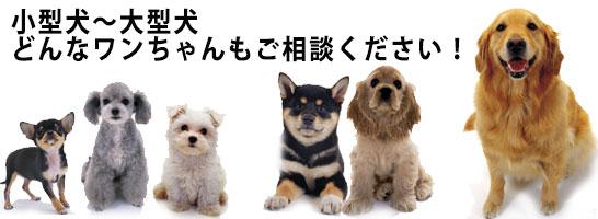 小型犬~大型犬、犬のしつけご相談下さい