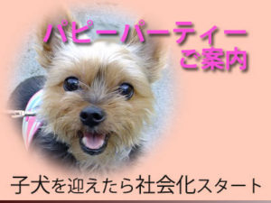 パピーパーティーご案内:子犬の社会化スタート
