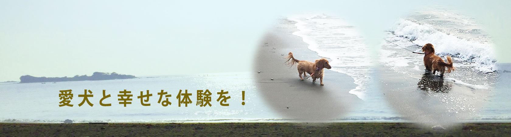 ドッグトレーニングで愛犬との幸せな体験を
