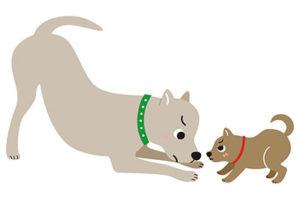 犬同士の接し方 犬の威嚇 喧嘩注意