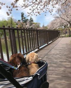 犬とお出かけ