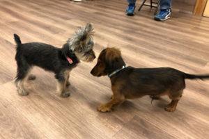 犬との遊び