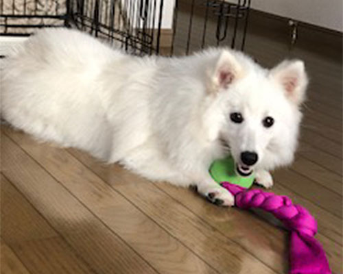 犬のオモチャ遊び 知育玩具