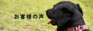 犬のしつけ 飼い主様の声