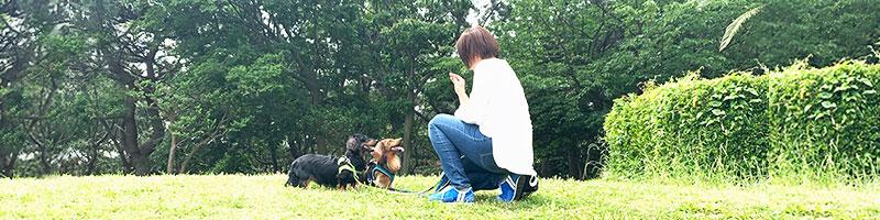 ドッグトレーナー 犬のしつけ風景