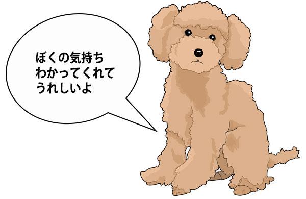 犬の気持ちを理解するドッグトレーニング