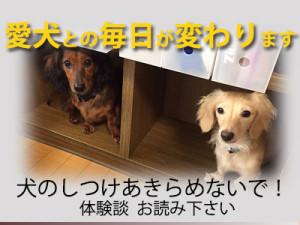 犬のしつけ 問題行動改善