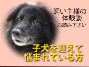 子犬のしつけ、パピートレーニング